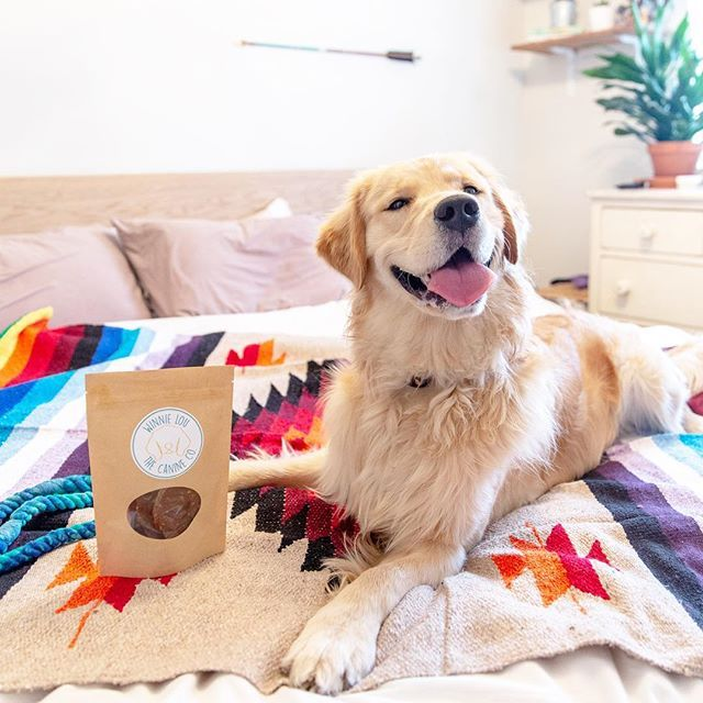 Big grins for some bison burger jerky on this fine Tuesday  . . The holidays are here and we know every pup wants a bag of Winnie Lou treats this season  . . : @smooreski #winnielou #winnieloucrew #dogtoy #dogmom #dogtreats #happyholidays #holidaycheer #giftideas #doggo #present #yum #puppers #goldens #goldenretriever #goldenretrievers #goldensofinstagram #goldenretrievertoday #goldenretrieverpuppy #furbaby #furryfamily #furryfriends #foodtuck #fordogs #coloradodogs #shoplocal #shopsmall