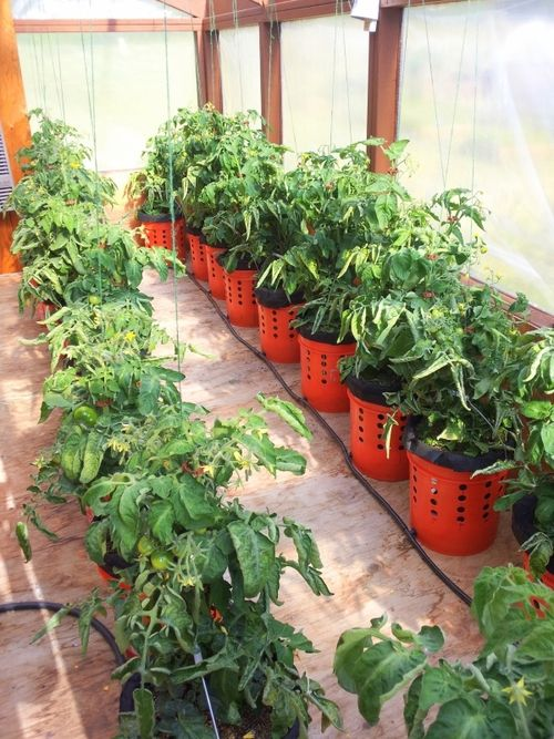 An easy to build self watering scalable container growing - Self watering 5 gallon bucket garden ...
