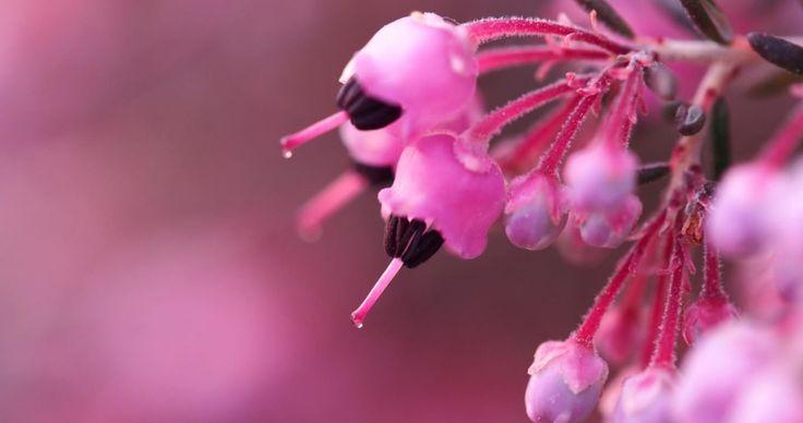 Heather pink blowjobs hd
