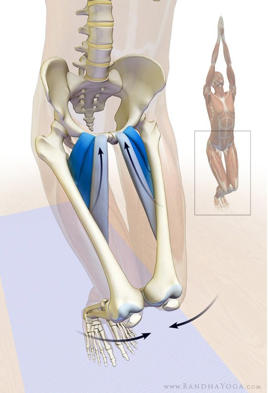 Adductors longus and brevis and the pectineus in Utkatasana