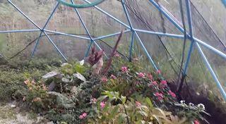 PVC PASSO A PASSO: Domo Geodésico em PVC para viveiro de plantas