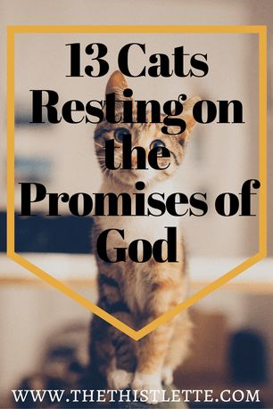 Bible cats! Check out this collection of Christian Cats for some serious devotional inspiration. If you like cats, Bibles, and bad puns this is a must read! Pin for later and check out my Christian Feminist website, The Thistlette today! Free mini devotional included.