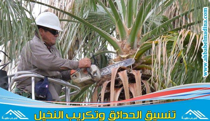 شركة تكريب النخيل بجدة وتنسيق كل أنواع الحدائق Https Ahbabelmadina Com Palm Pruning Jeddah Jeddah Hard Hat Hats