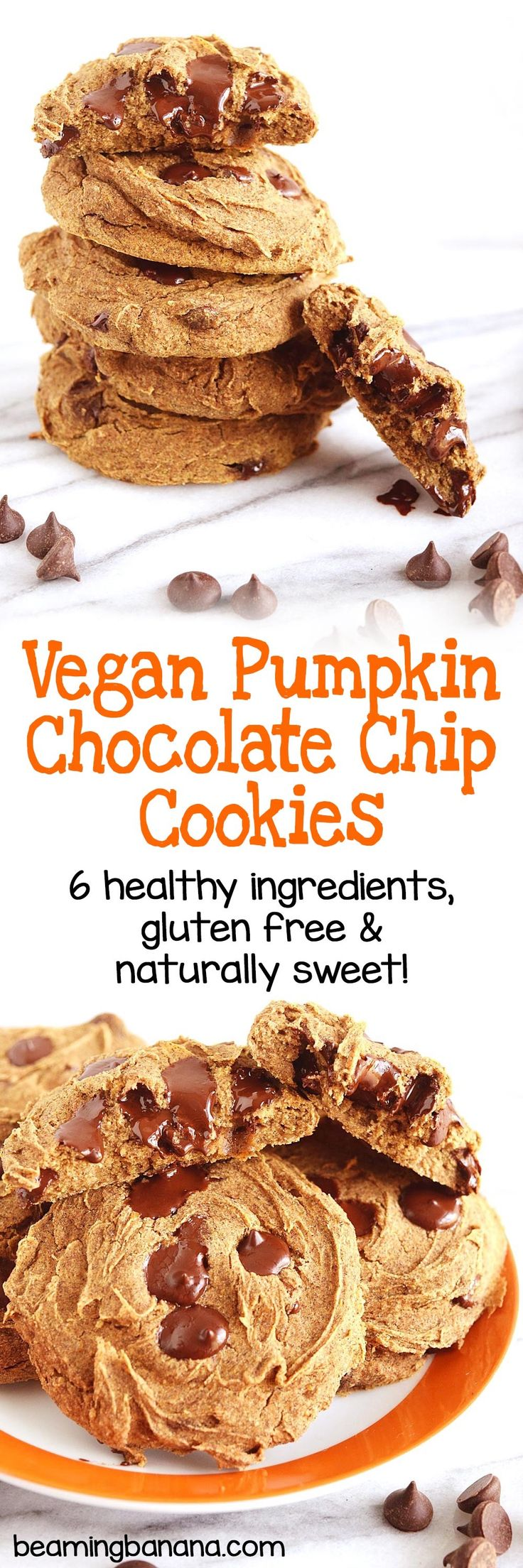 These vegan pumpkin chocolate chip cookies are the perfect combination of a chocolate chip cookie and the pumpkin spice flavors of fall! 6 healthy ingredients, gluten free and naturally sweetened.