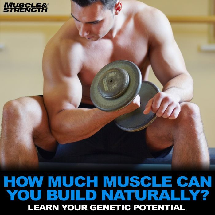 How much muscle can you build naturally?  Take a look at natural muscle building, arm size potential and body types in this complete guide to bodybuilding genetics.