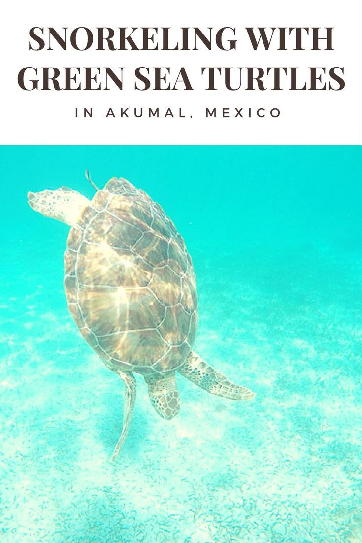 My unforgettable experience: Snorkeling with Green Sea Turtles in Akumal, Mexico. Check out my insider tips!