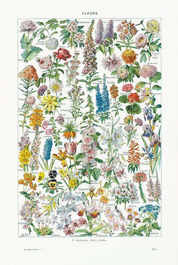 1930 Fleurs Pivoine Lilas Orchidées Rose Tremiere Delphinium