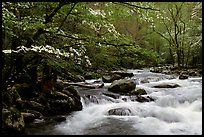 Little River  Tennessee -Spring
