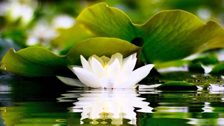 2 HOURS of BEST Buddha Meditation Song ♥ Buddhism Music, Buddhist Songs, Mantra, Zen, Yoga Music - YouTube