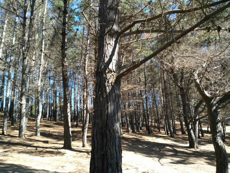 """Beach forest """"El Canelo, Chile"""""""