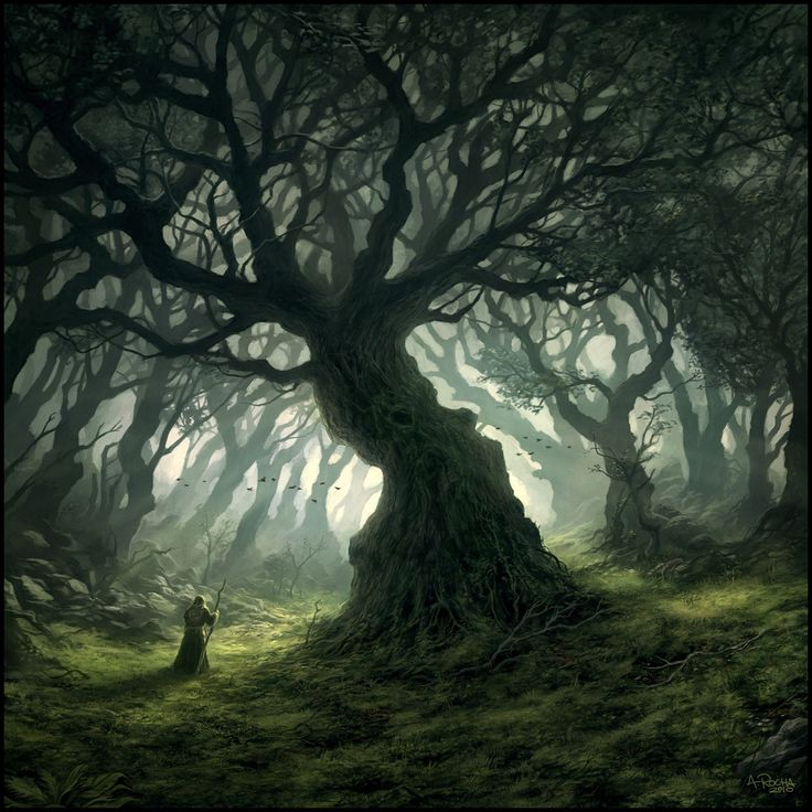 Magical Forest by Andreas Rocha, Portugal ( I would have called the The Gathering Place ) .....just sayin'