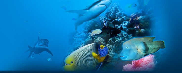 Océanopolis grand aquarium pavillon tropical