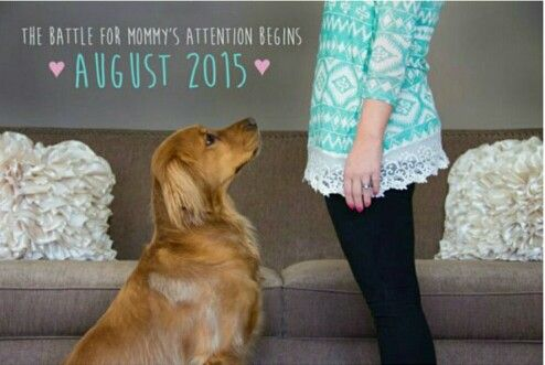 Baby announcement with the dog