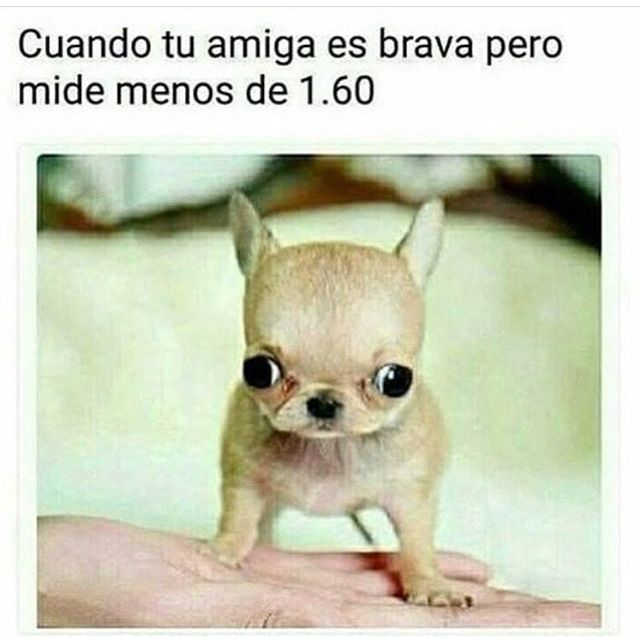 Jajajajajaja - meme #bromasgraciosas