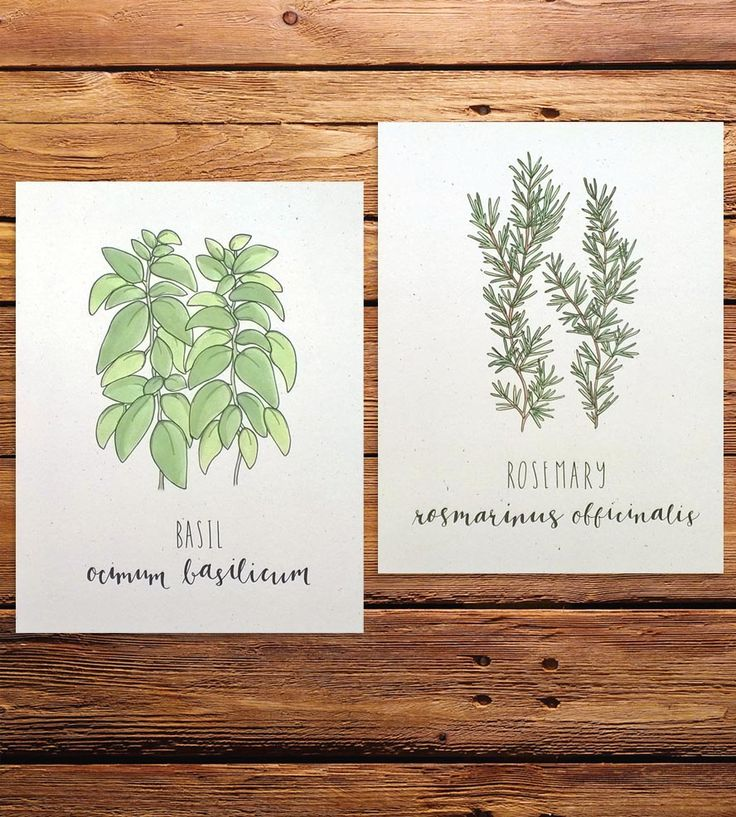Herb Art Prints, Set of 2 by Champaign Paper on Scoutmob
