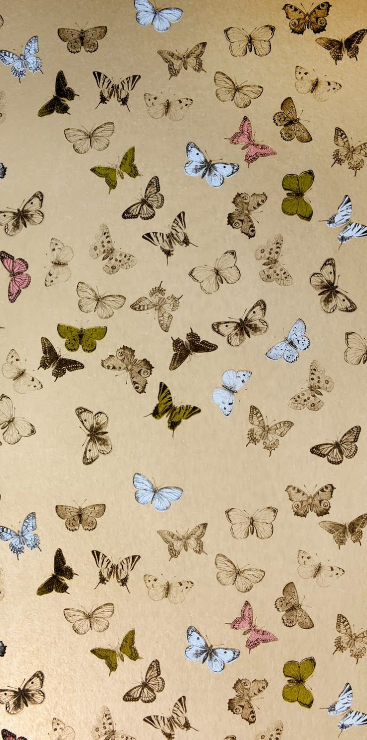 Small Moths In Bedroom 17 Best Images About Patterns Butterflies On Pinterest