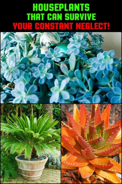 Always so busy that you forget to water your plants? Then these houseplants are the perfect fit for you!