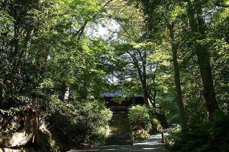 妙本寺 豊かな緑は癒し効果抜群!春から梅、紫陽花、秋には紅葉と見所いっぱいの写真スポットです。