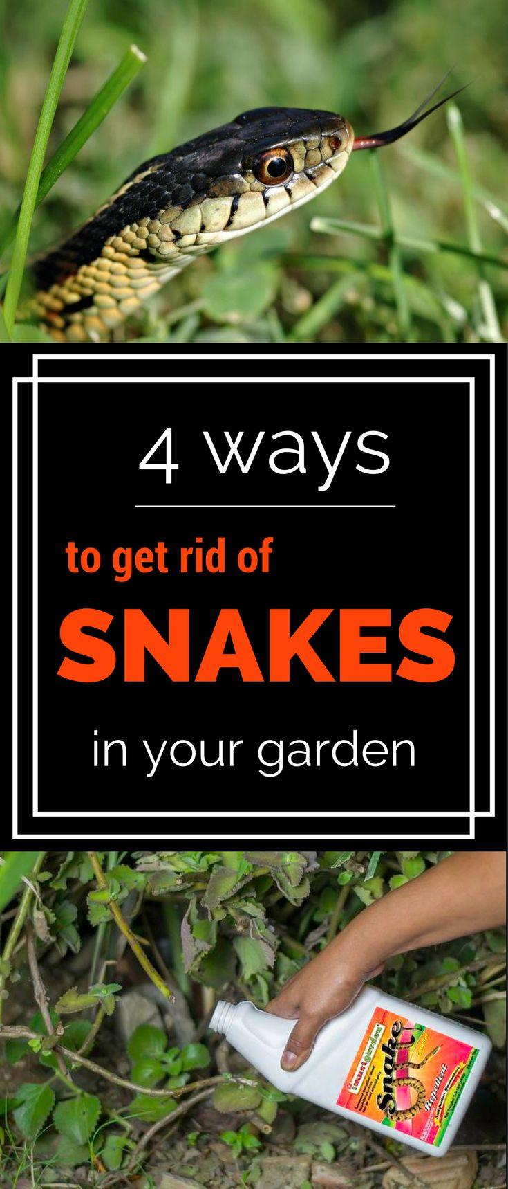2172 Best Images About Garden Ideas Ii On Pinterest Gardens Raised Beds And Obelisks