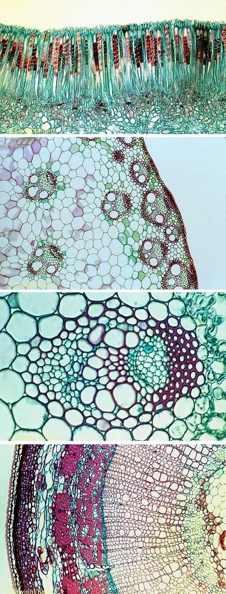 Beauty in nature: microscopic plant cells. It all comes ... pic.twitter.com/nN0NPm1K6V