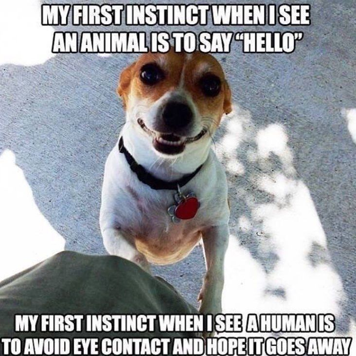 Oh No You Re Not Alone Doggie Petmemes Dogs Printypets Funny Animal Pictures Funny Animals Animals
