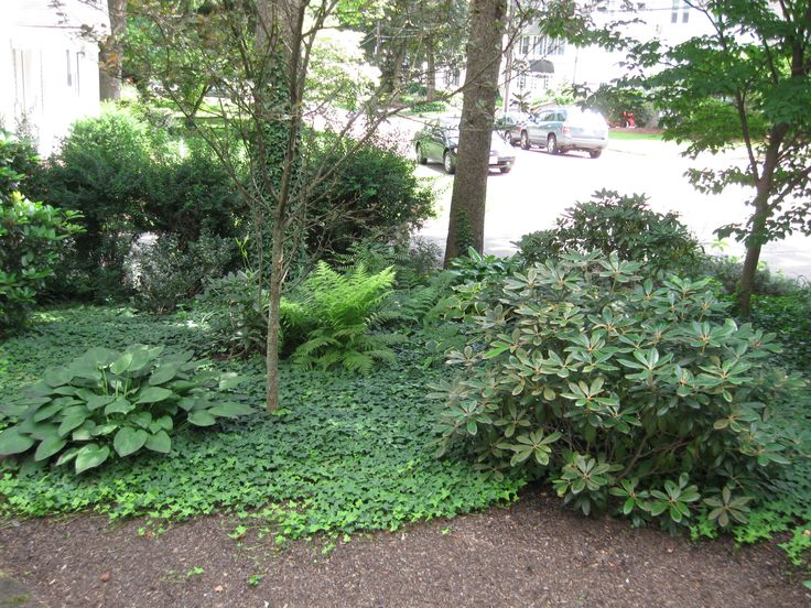 Small Backyard Landscaping No Grass | Mystical Designs and ... on No Grass Backyard  id=86542
