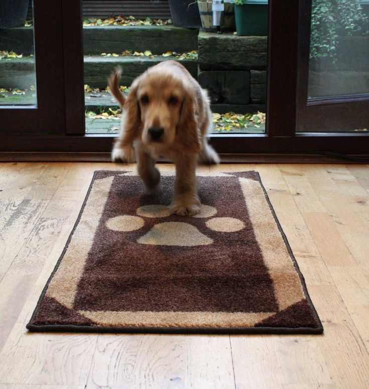 Door mat and floor rug to stop those muddy paws from www.blissandbloom.co.uk