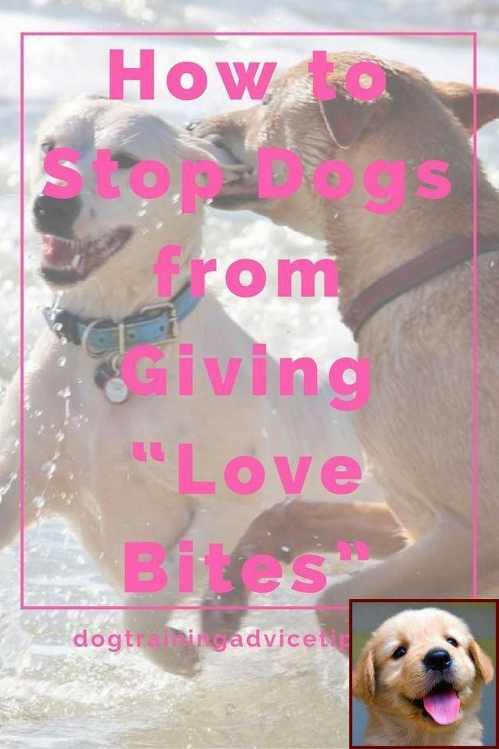 1 Have Dog Behavior Problems Learn About Aggressive Dog Behavior