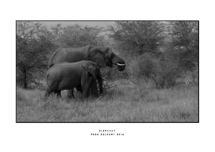 Elephants in Kruger Park, South Africa.