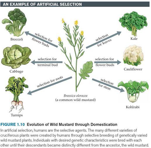 Variation In Plants Other, Genetic variati...