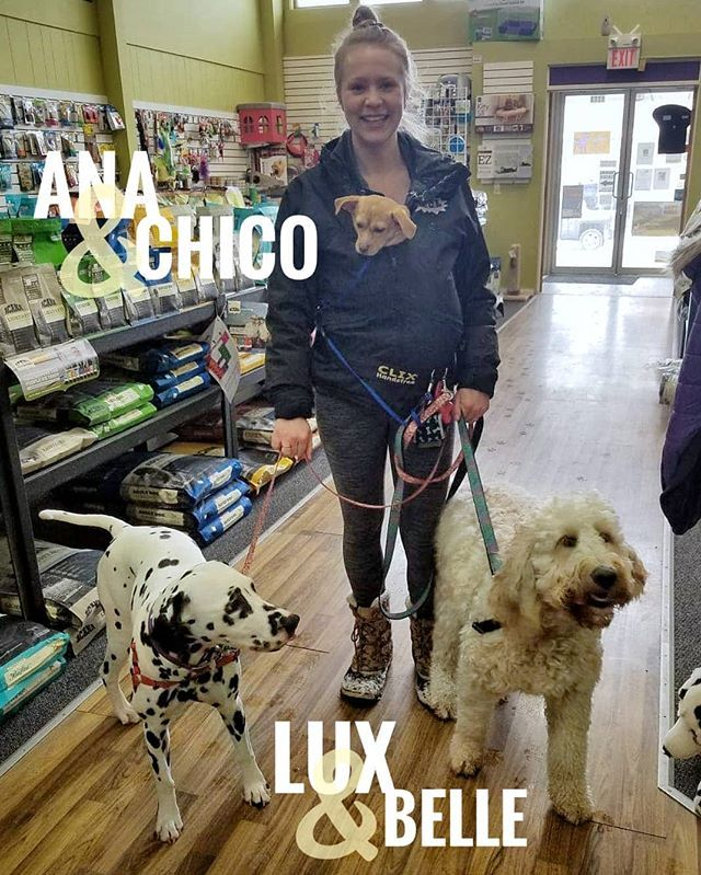 Ana Lux And Belle Our For A Walk While Chico Is Out For A Carry