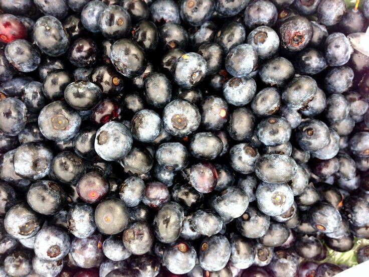 Fresh blueberries #garden #farm #local #berries #fresh #summer #blue # ...