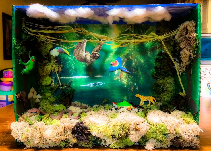 Essay about land animals diorama