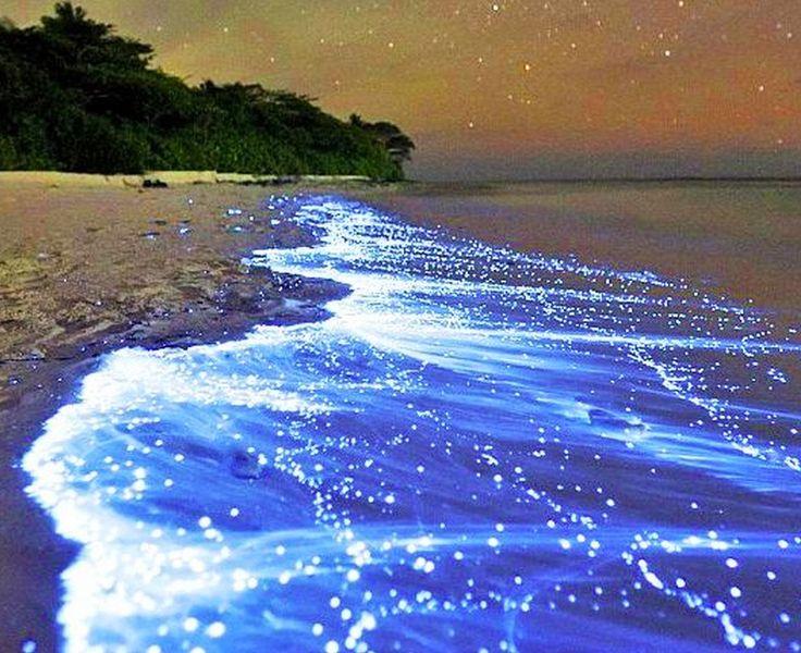 """地上に広がる天の川...星屑が落ちてきたようなモルディブ""""Sea Of Stars""""(星の海)"""