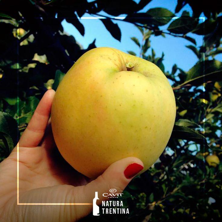 I gusti dell'autunno: mele, #castagne, ciuiga e tanto altro. Quale posto migliore del #Trentino per assaporarli? Agenda alla mano, scopri tutti gli appuntamenti di #Ottobre2015