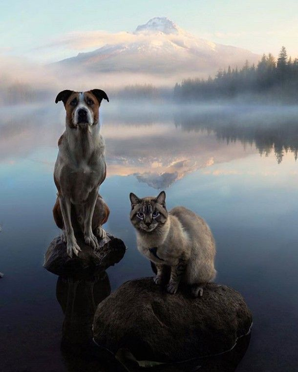 チワックス チワックス の画像 チワックスとチワワの マリっ喜 チワワ チワックス 動物