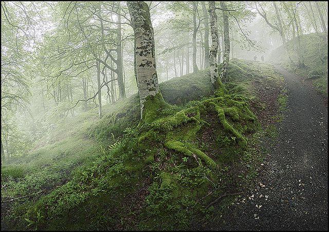 The Pilgrims | Bianca van der Werf | Photography | Nature | Forest