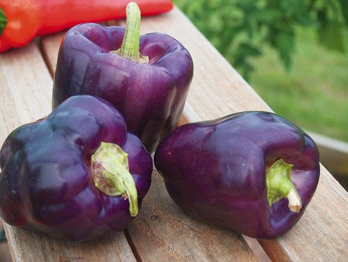 PURPLE STAR PEPPER: 1) A sweet pepper 2) Annual 3) Full Sun 4) Moderate Water 5) Days to Harvest = 92+