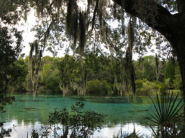 Discover breathtaking Juniper Springs and more on Florida's Black Bear Scenic Byway