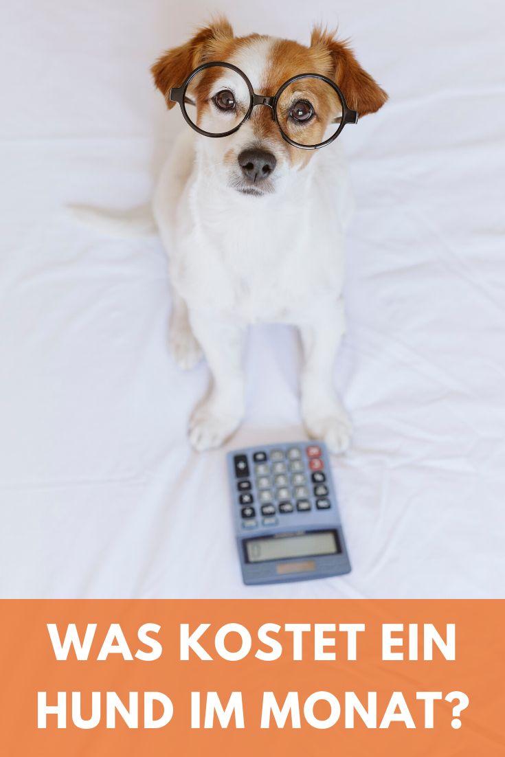 Pin Auf Hunde Blog