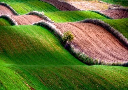dziembowski zbigniew sharing-POLAND, Rolling fields of Roztocze (Eastern Poland).jpg
