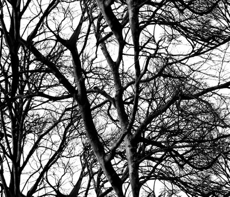 The Tree Lace ~ Black and White fabric by peacoquettedesigns on Spoonflower - custom fabric