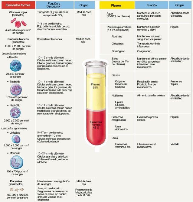 Glóbulos rojos (entrocrtos)  4 a 6 millones por mm' de sangre Glóbulos…