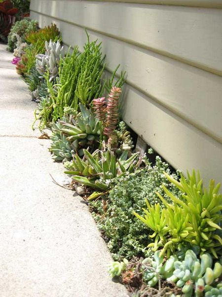 Another great idea for that what-to-do-with space between the house and the walkway: plant different kinds of succulents.