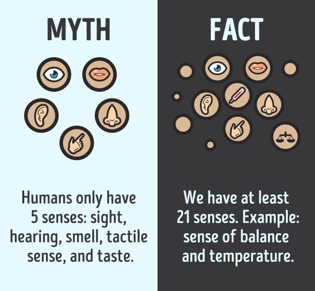 12 MYTHS ABOUT THE HUMAN BODY