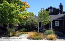 Dig Your Garden Landscape Design, Mill Valley Garden replaces lawn with drought tolerant alternative.