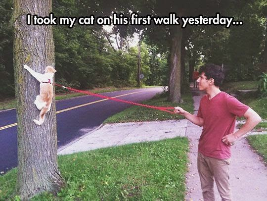 First walk for a cat. For more funny cat memes and to share your kitty with the world, go to https://www.facebook.com/catloversonly/