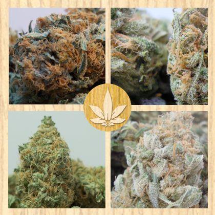 Health Pack : #Indica Sampler #mmj #cannabis #marijuana #pot #weed #dro #kief #medible #edible #pain #natural #medicine