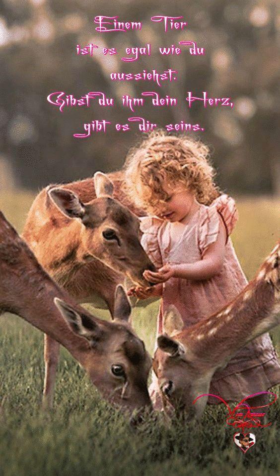 Einem Tier ist es egal wie du aussiehst. Gibst du ihm dein Herz, gibt es dir seins.