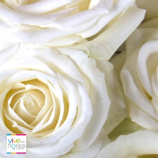 Simbolo de Pureza e Inocencia...Nada mejor que las rosas blancas de vivelasflores.com para llevar este mensaje.